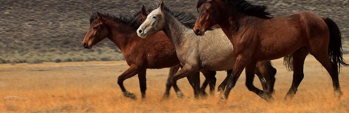 Running Wild by Bert Dennison