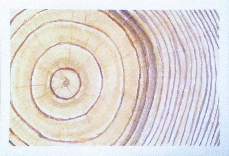מעגל הדאגה המוסרית וסטוריטלינג - טבעות בליבת עץ